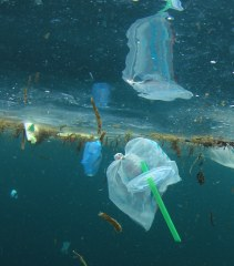 The last straw: banning the sale of plastic straws