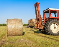 The future of the rural economy